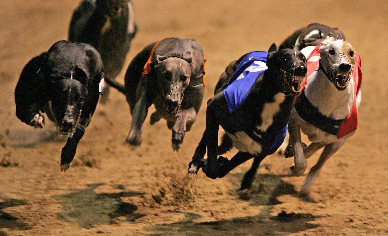 Greyhound st leger bettingadvice binary options no deposit bonus november 2021 republican
