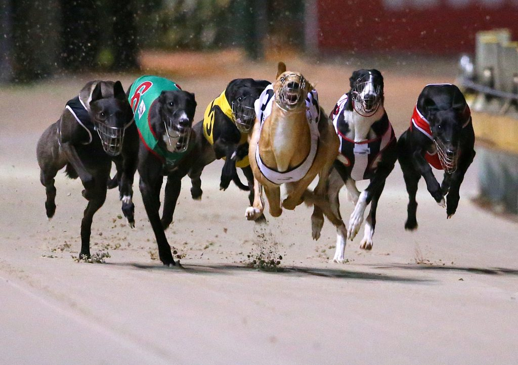 Which Countries Have Greyhound Racing