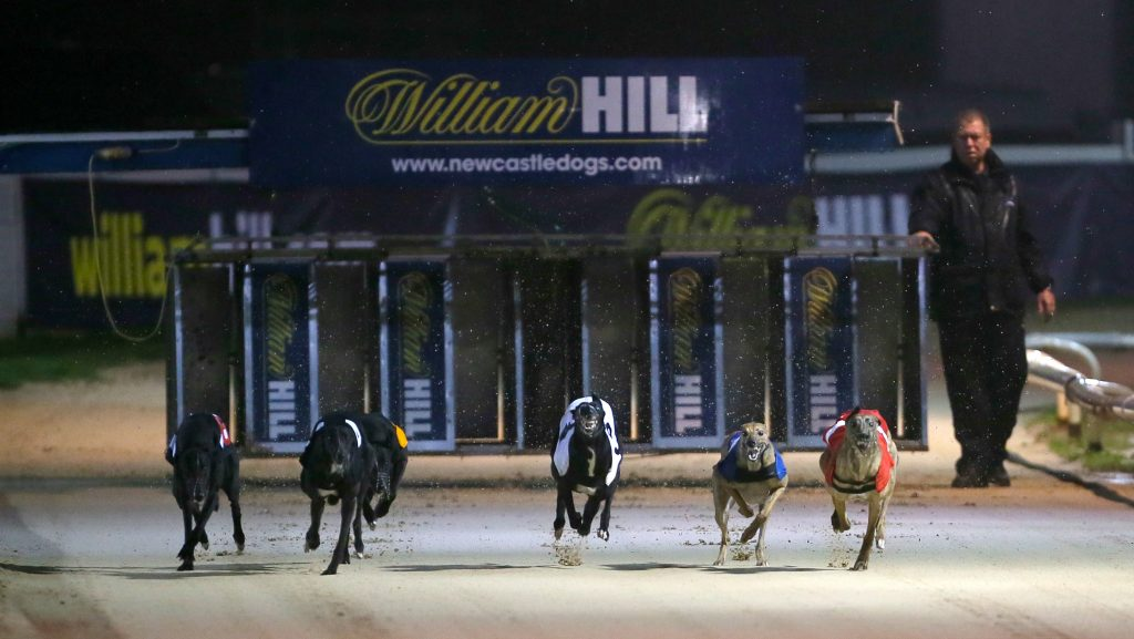 Best greyhound tracks - Newcastle Dog Track