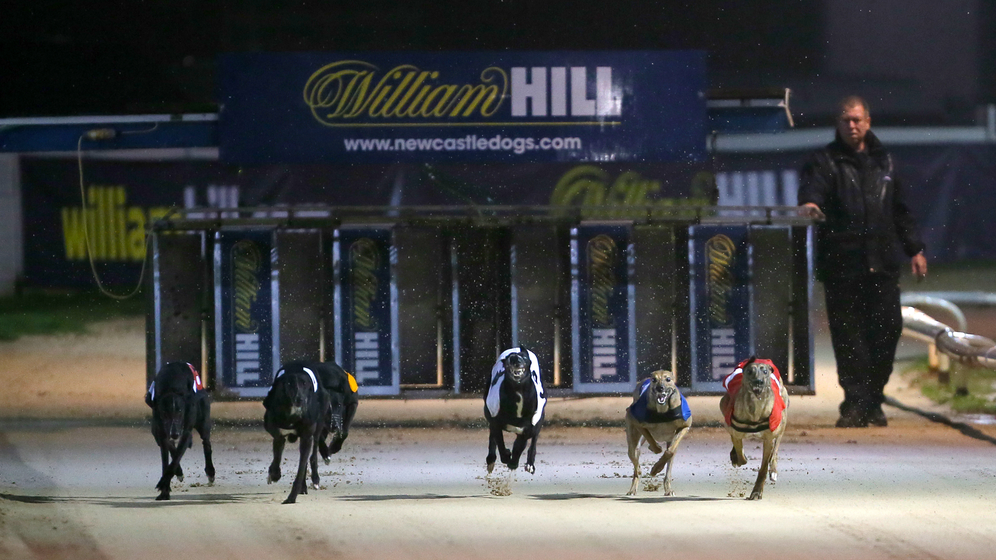 Greyhound st leger bettingadvice best online betting sites offers cy