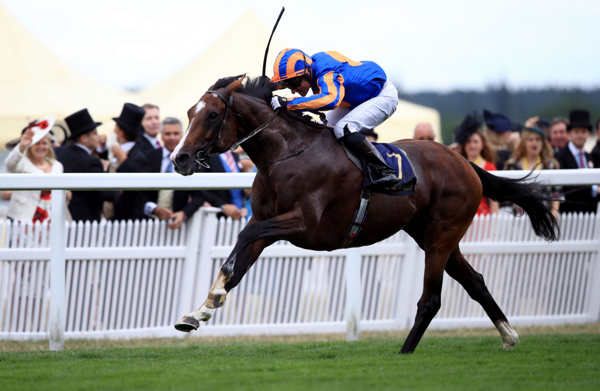 Idaho horse is favourite in the doncaster cup odds