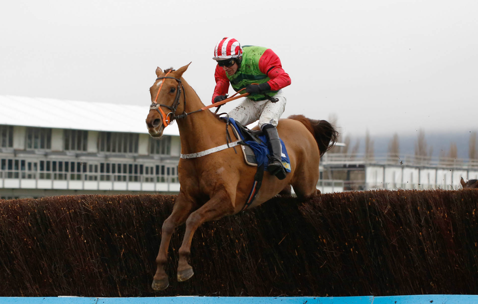 Charlie Hall Chase betting