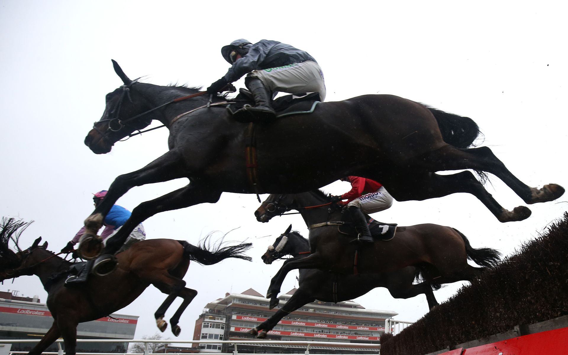 Cheltenham Festival betting odds