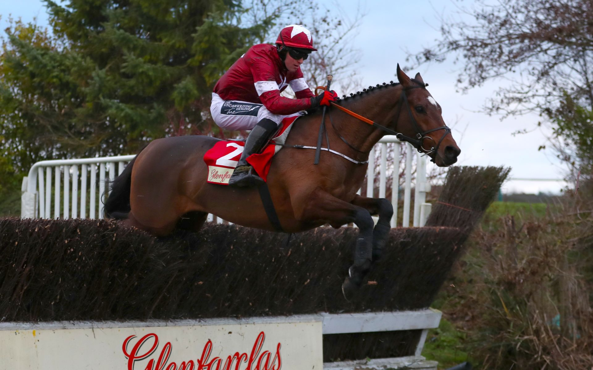Tiger Roll Cross Country betting odds Cheltenham Festival