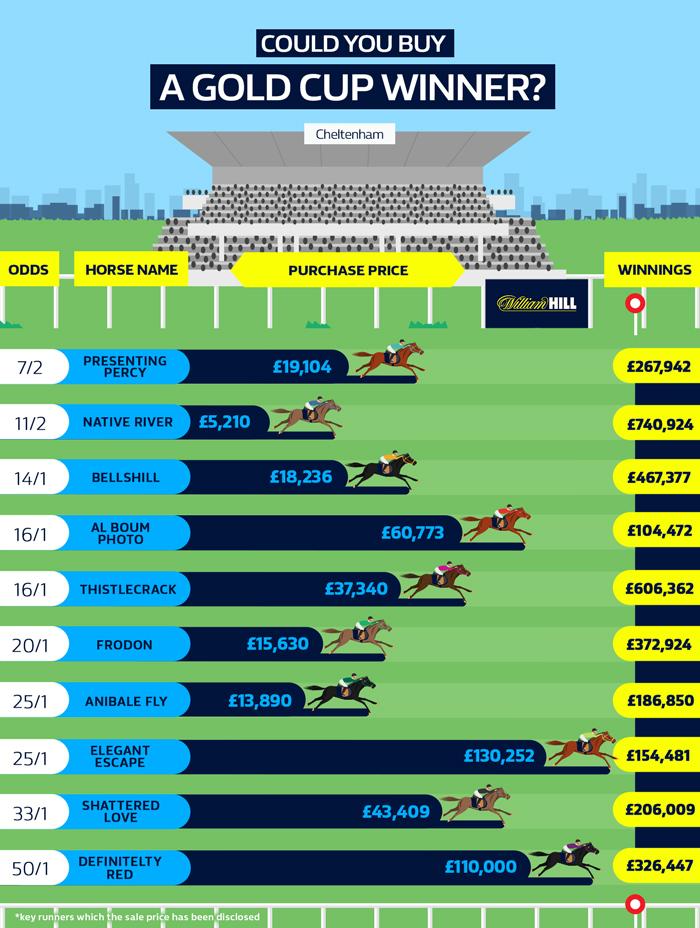 Cheltenham horse racing infographic