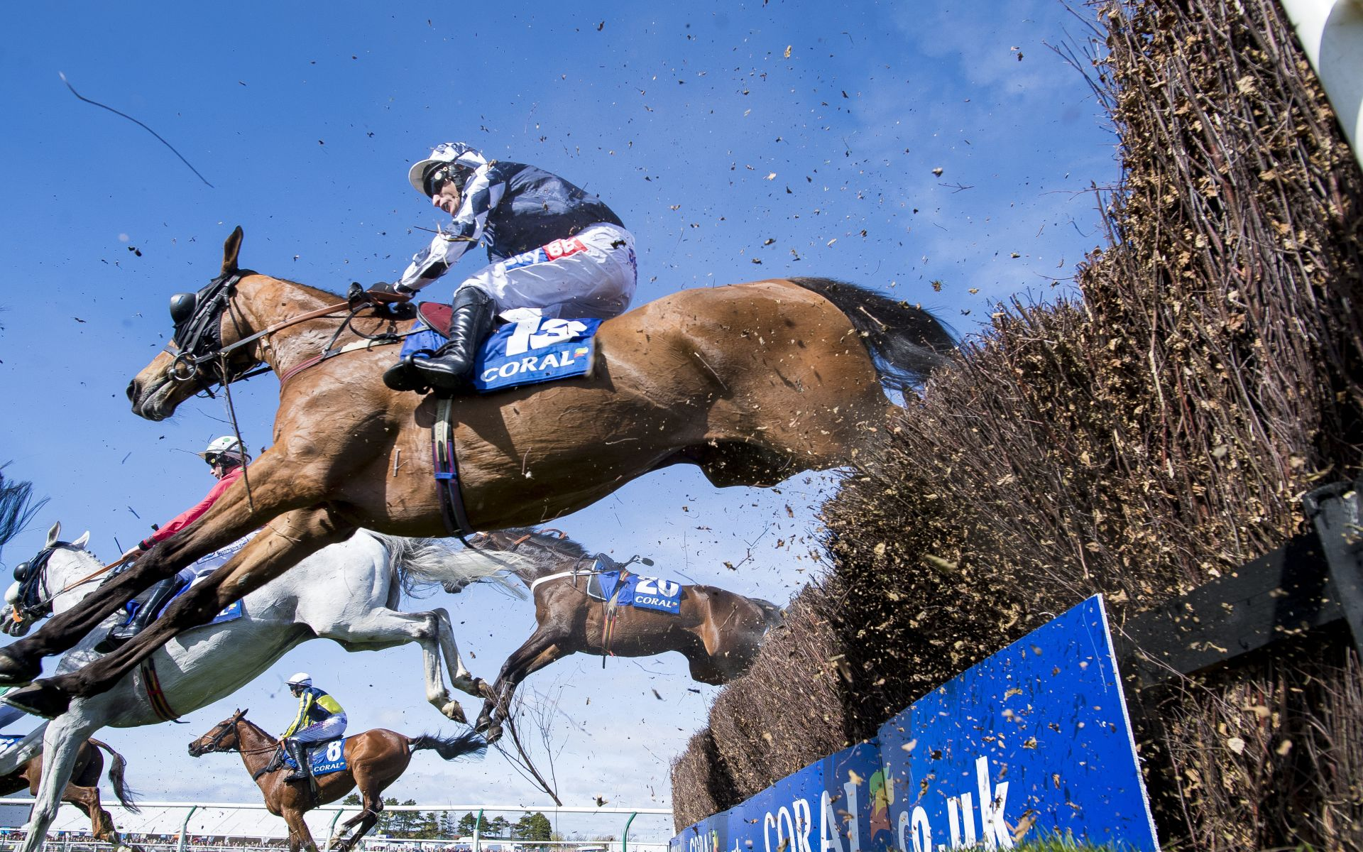 Scottish Grand National betting